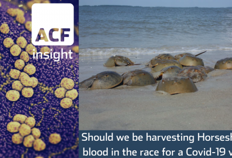 Horseshoe crab blood is key to making a Covid-19 vaccine – but the ecosystem may suffer