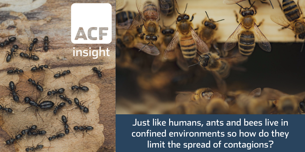 What can ants and bees teach us about containing disease