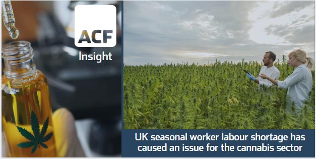 Seasonal workforce curbs UK cannabis growth?